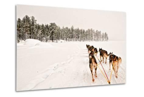 Dog Sledding Across Frozen Lakes in Jokkmokk, Swedish Lapland-Lola Akinmade Akerstrom-Metal Print