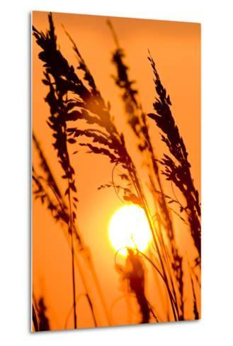 Sea Grass Silhouetted At Sunrise-Brian Gordon Green-Metal Print