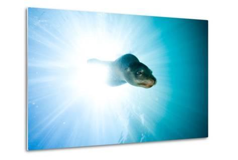 A Sea Lion Descends in a Beam of Light-Ben Horton-Metal Print