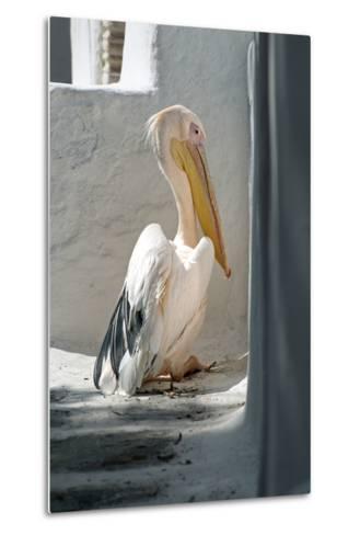 Petros the Pelican, Chora, Mykonos, Greece-David Noyes-Metal Print