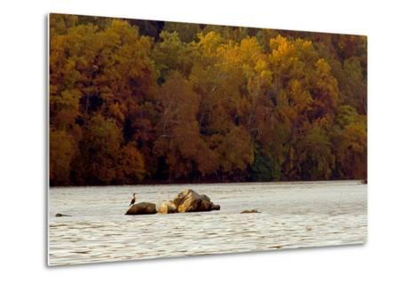 A Duck Rests on One of the Three Sisters Islands in the Potomac-Rex A. Stucky-Metal Print