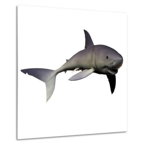 Mako Shark-Stocktrek Images-Metal Print