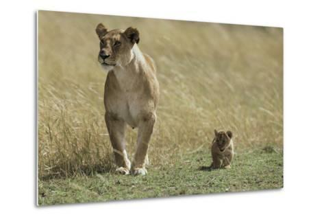 Lioness and Cub-Mark C. Ross-Metal Print