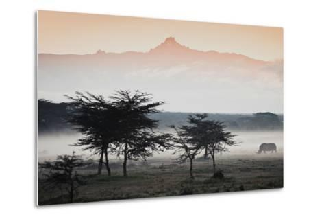 White Rhinos Appear Out of the Mist in Front of Mount Kenya-Robin Moore-Metal Print