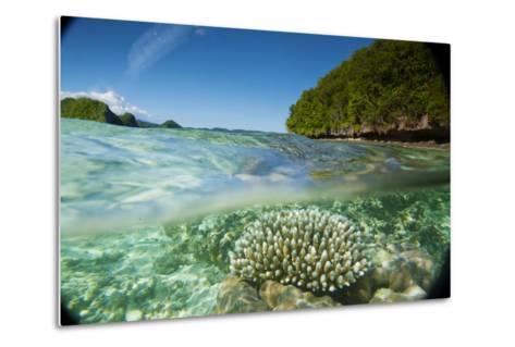 The Sea Floor of Palau's Rock Islands-Stephen Alvarez-Metal Print