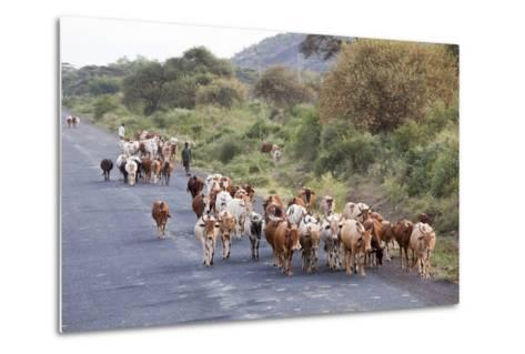 Herd of Farm Cattle on Country Road in Rift Valley, Ethiopia-Martin Zwick-Metal Print