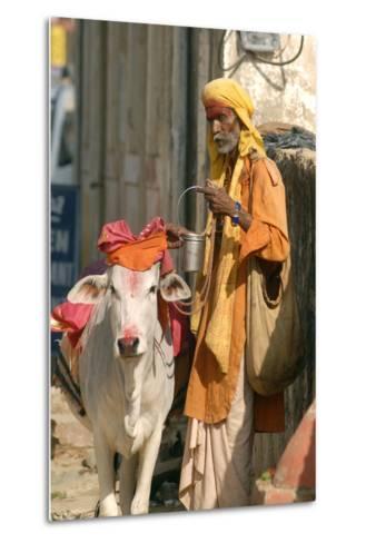 Sadhu, Holy Man, with Cow During Pushkar Camel Festival, Rajasthan, Pushkar, India-David Noyes-Metal Print