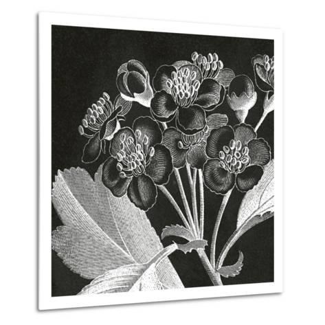 Mespilus Dxyacantha-Thea Schrack-Metal Print