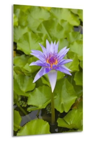 Water Lily Flower, Palau-Keren Su-Metal Print