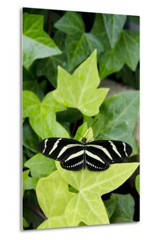 Wings of Mackinac Butterfly Conservatory and Garden, Mackinac Island, Michigan, USA-Cindy Miller Hopkins-Metal Print
