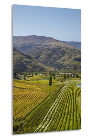Felton Road Vineyard, Autumn, Bannockburn, Central Otago, South Island, New Zealand-David Wall-Metal Print