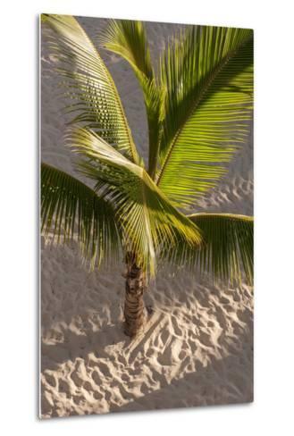 Palm Tree, Bavaro Beach, Higuey, Punta Cana, Dominican Republic-Lisa S^ Engelbrecht-Metal Print