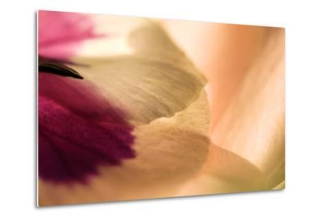 Close Up of a Pansy-Vickie Lewis-Metal Print