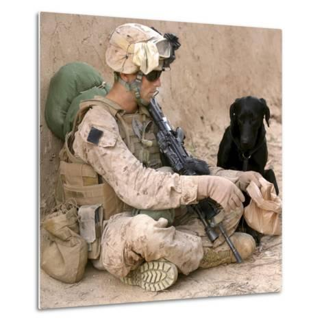 A Dog Handler Gives Water To His Dog While On a Patrol in Afghanistan-Stocktrek Images-Metal Print