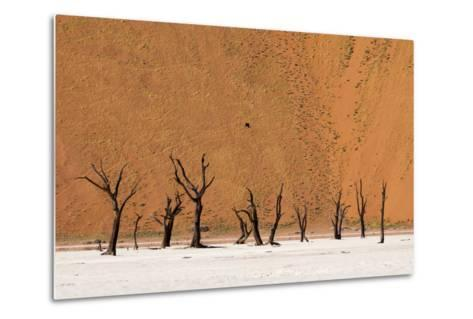 Camel Thorn Trees Against Red Sand Dunes in the Sossusvlei-Sergio Pitamitz-Metal Print