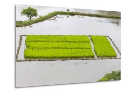 Rice Terraces, Agriculture, Philippine Cordilleras, Banaue, Ifugao, Philippines-Keren Su-Metal Print