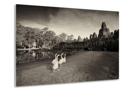 Geese Walk on the Grounds of the 12th Century Temple, Bayon-Jim Richardson-Metal Print