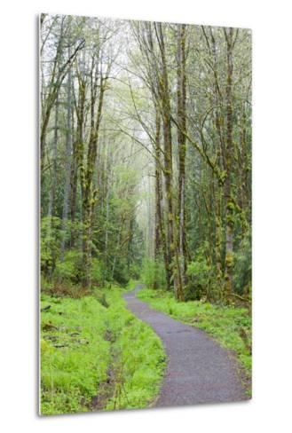 Forest Trail, Tiger Mountain State Forest, Washington, USA-Jamie & Judy Wild-Metal Print