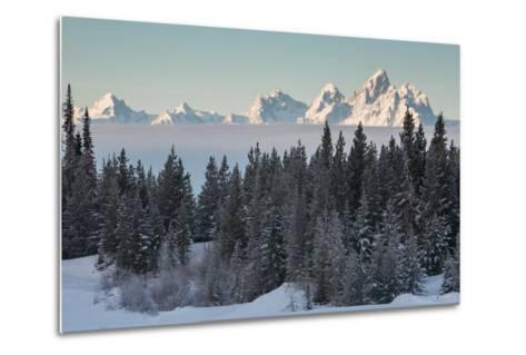 A Winter Forest Scene with the Teton Range in the Distance-Greg Winston-Metal Print