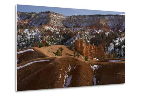 Snow-Dusted Landscape of Hills, Rock Formations and Pine Trees-Norbert Rosing-Metal Print