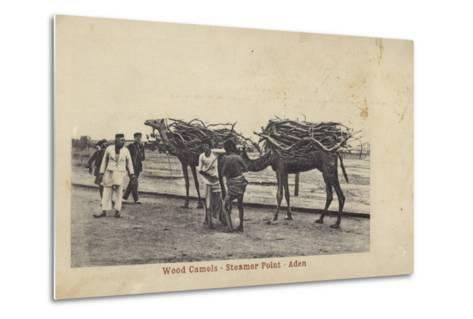 Camels Carrying Wood, Steamer Point, Aden--Metal Print