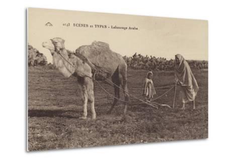 Scenes and Types - Arabic Ploughing--Metal Print