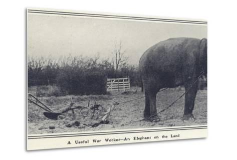 A Useful War Worker - an Elephant on the Land--Metal Print