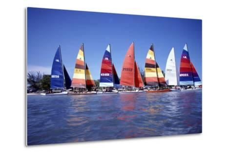 Hobie Cats Anchored and Lined Up Along the Shore, C.1990--Metal Print