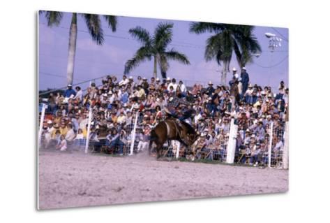 Homestead Rodeo, C.1985--Metal Print