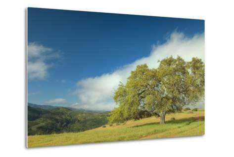Oak Tree and Central Valley Hills, California-Vincent James-Metal Print