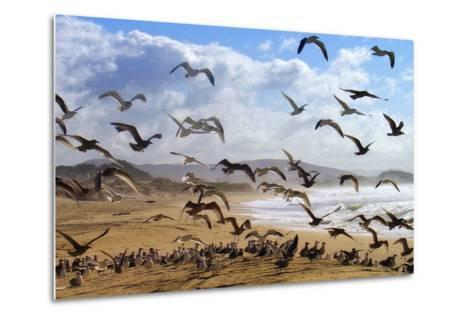 Beach Birds, Half Moon Bay, California Coast-Vincent James-Metal Print