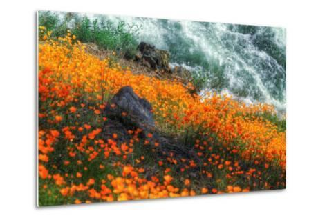 Poppies by the Merced River, Merced River Canyon-Vincent James-Metal Print