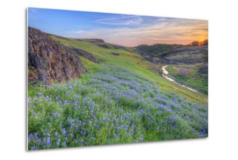 Wildflower Hillside at Sunset, Table Mountain-Vincent James-Metal Print