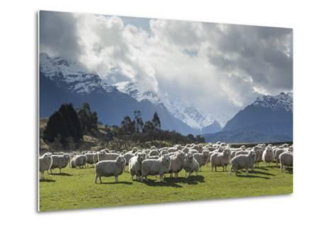Sheep and Mountains Near Glenorchy, Queenstown, South Island, New Zealand, Pacific- Nick-Metal Print