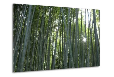 Japan, Kyoto. Sunburst Inside the Arashiyama Bamboo Grove-Jaynes Gallery-Metal Print
