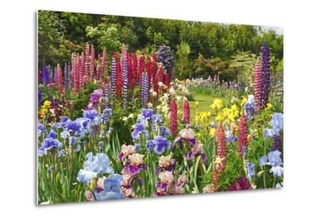 Schreiner Iris Gardens in Salem, Oregon-Craig Tuttle-Metal Print