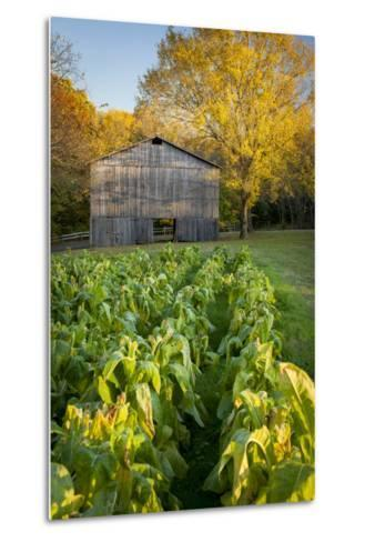 Old Tobacco Farm Along the Natchez Trace, Tennessee, USA-Brian Jannsen-Metal Print