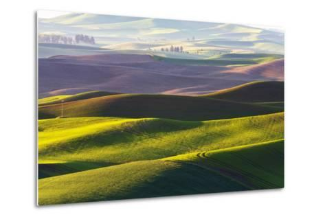 USA, Washington, Palouse. Rolling Hills Covered by Fields of Peas-Terry Eggers-Metal Print