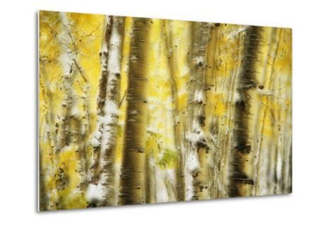 Aspen Grove Blanketed with Snow-Darrell Gulin-Metal Print