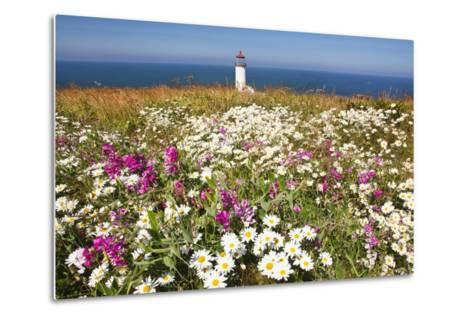 Wildflwers at North Head Lighthouse, Washington State, Pacific Ocean, Pacific Northwest-Craig Tuttle-Metal Print