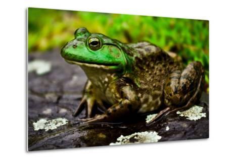 Fat Bull Frog Lords over Connecticut Water-Daniel Gambino-Metal Print