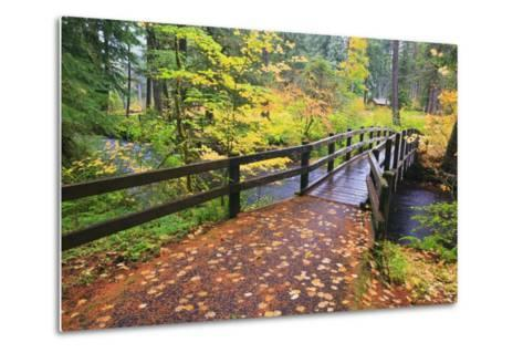 Fall Colors Add Beauty to South Trail at Silver Falls State Park, Oregon, USA-Craig Tuttle-Metal Print