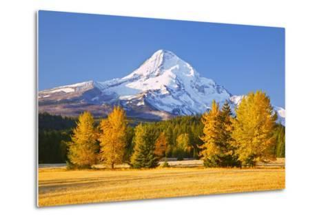 Sunrise over Mt. Hood and Fall Color Trees, Hood River, Oregon Cascades-Craig Tuttle-Metal Print