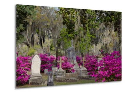 Azaleas and Headstones in Bonaventure Cemetery, Savannah, Georgia, USA-Joanne Wells-Metal Print