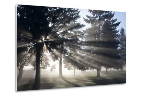 Sunrise Through Fog and Trees, Willamette Valley, Oregon-Craig Tuttle-Metal Print