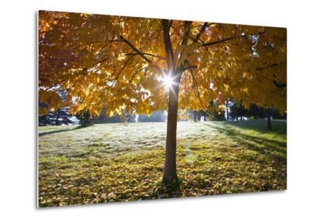 Sunshine Through a Fall Tree-Craig Tuttle-Metal Print
