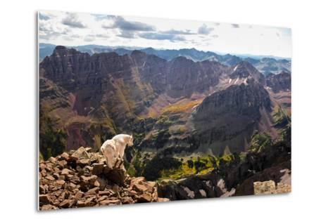 Mountain Goat Stands at the Edge of Bouldery Cliff at the Maroon Bells in Colorado-Kent Harvey-Metal Print