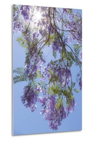 Mexico, San Miguel De Allende. Sunburst Through Jacaranda Tree-Jaynes Gallery-Metal Print