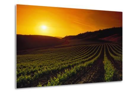 Vineyards at Sunset-Charles O'Rear-Metal Print