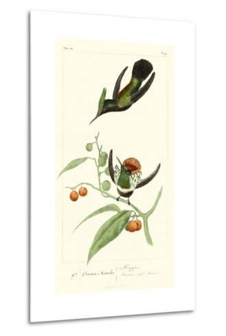 Lemaire Hummingbirds III-C.L. Lemaire-Metal Print